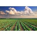 - Industria Agrícola